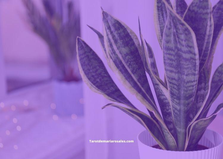 Plantas mágicas que debes tener en tu Habitación