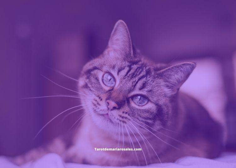 Significado de los gatos en nuestros sueños