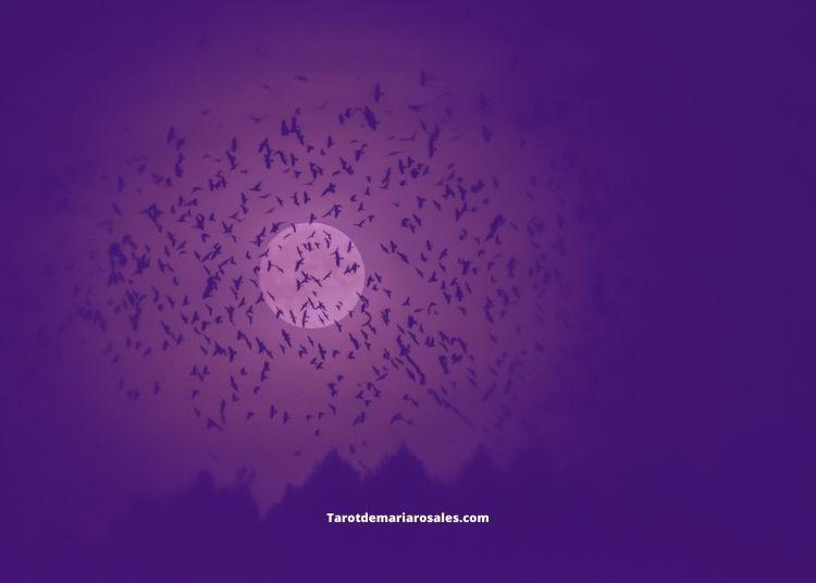significado de los pájaros que cantan de noche