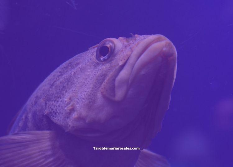 soñar con pez grande