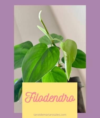 5 Plantas que pueden ayudarte a purificar el Aire del Hogar 4