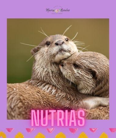 Por qué estos 6 animales simbolizan el amor 7