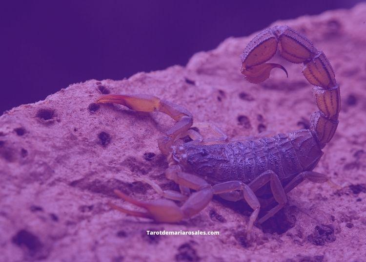significado espiritual del escorpion