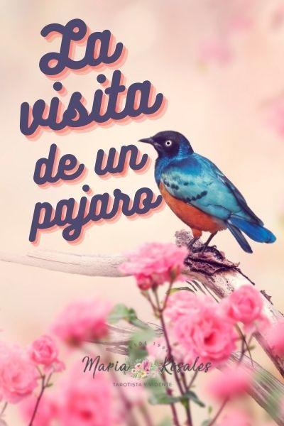 ¿Qué Significa la Visita de un Pájaro? Este es su verdadero significado espiritual 1