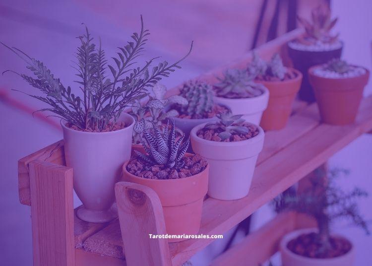 cuidar plantas con magia